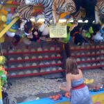 CNE 2011 11